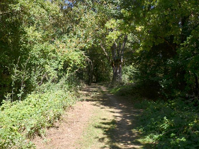 Sur le chemin de la biodiversité